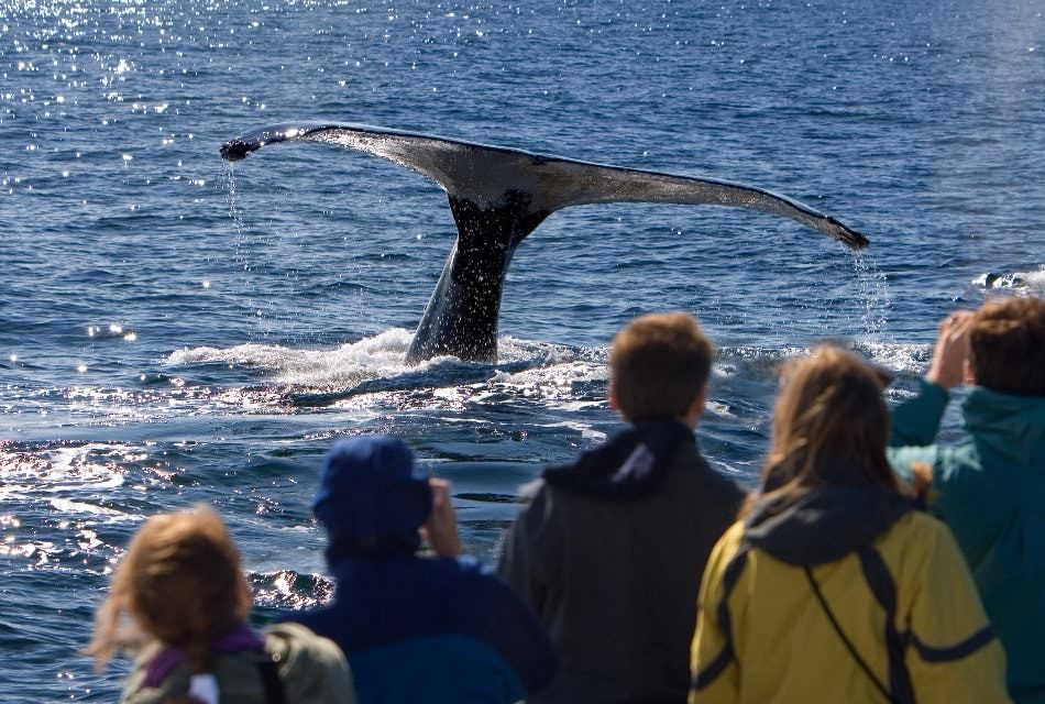 People watching a whale in the water